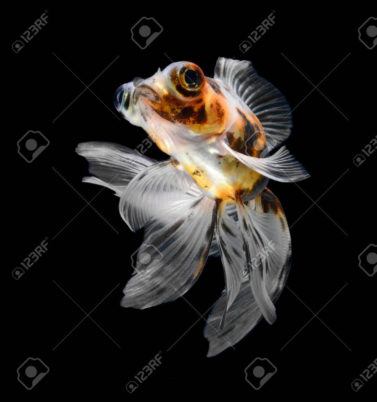 goldfish isolated on black background Stock Photo - 18001171