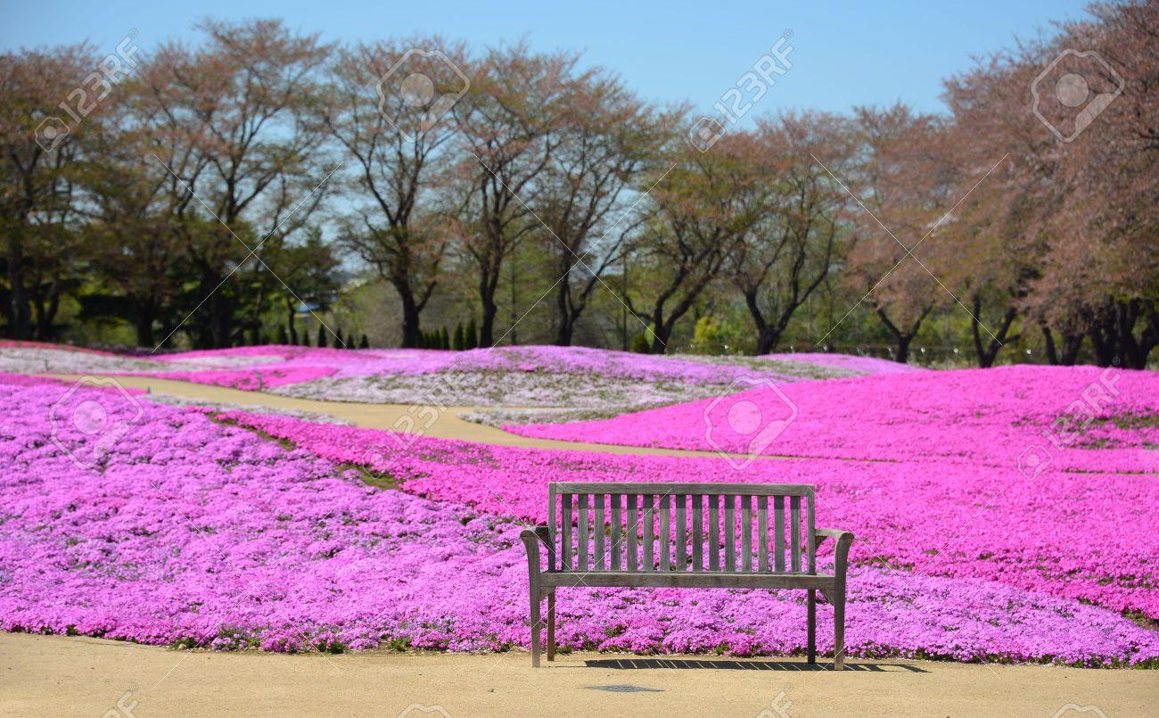 landscape with pink flowers, pink moss, shibazakura park Stock Photo - 21097284