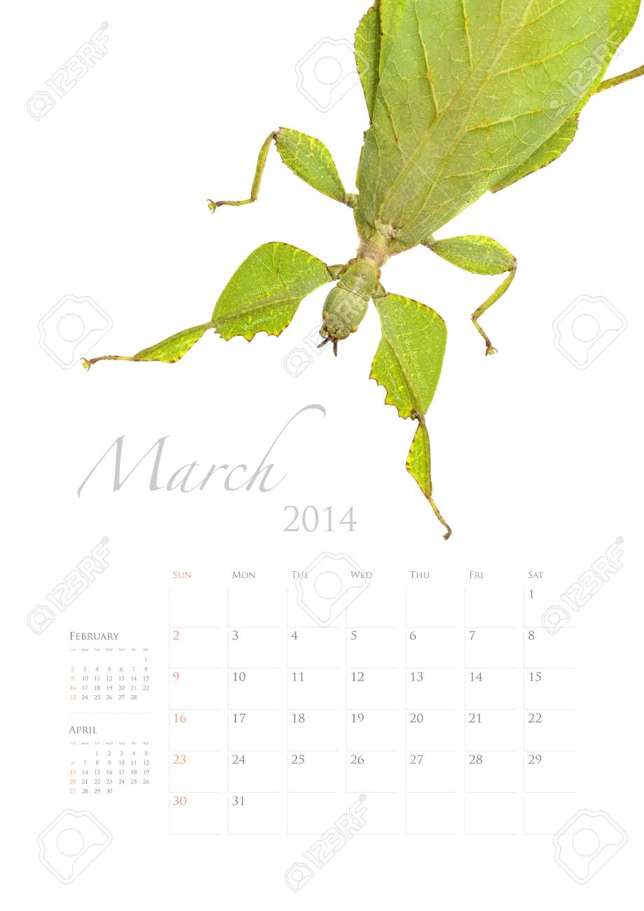 2014 calendar , insect bug beetle design on white background Stock Photo - 22975029