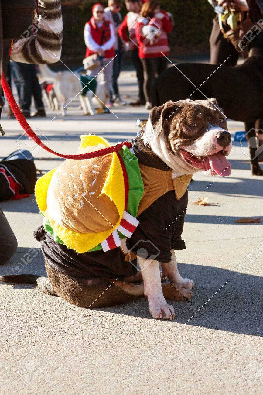 Atlanta Ga Usa December 5 2015 A Dog Wearing A Hamburger
