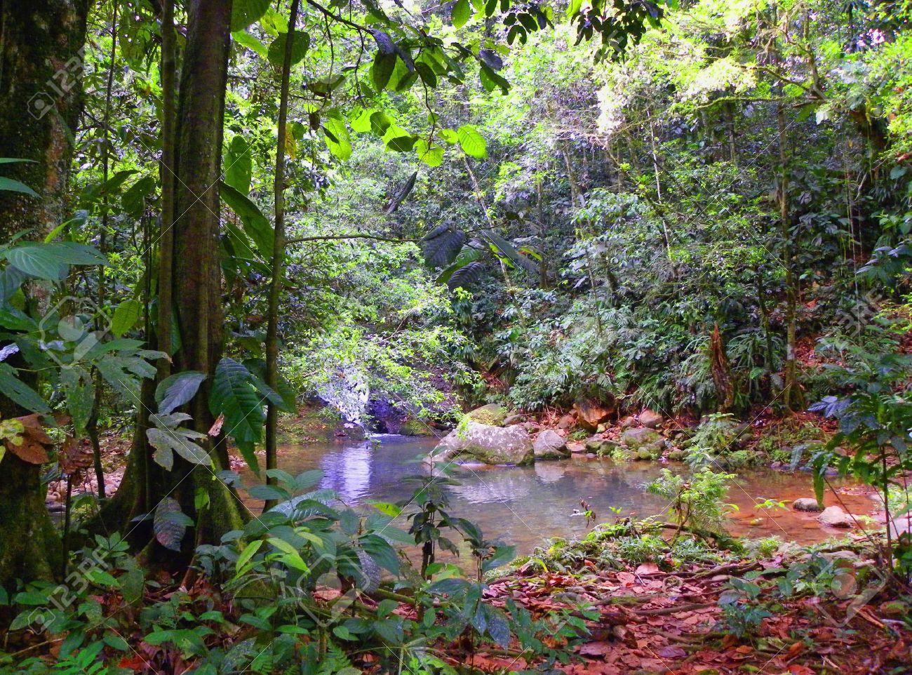 tropical rainforest vegetation Stock Photo - 16940535