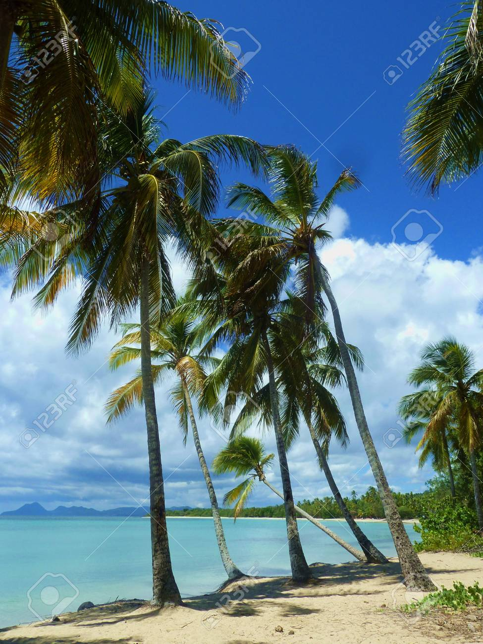 palms on the beach Stock Photo - 50310028