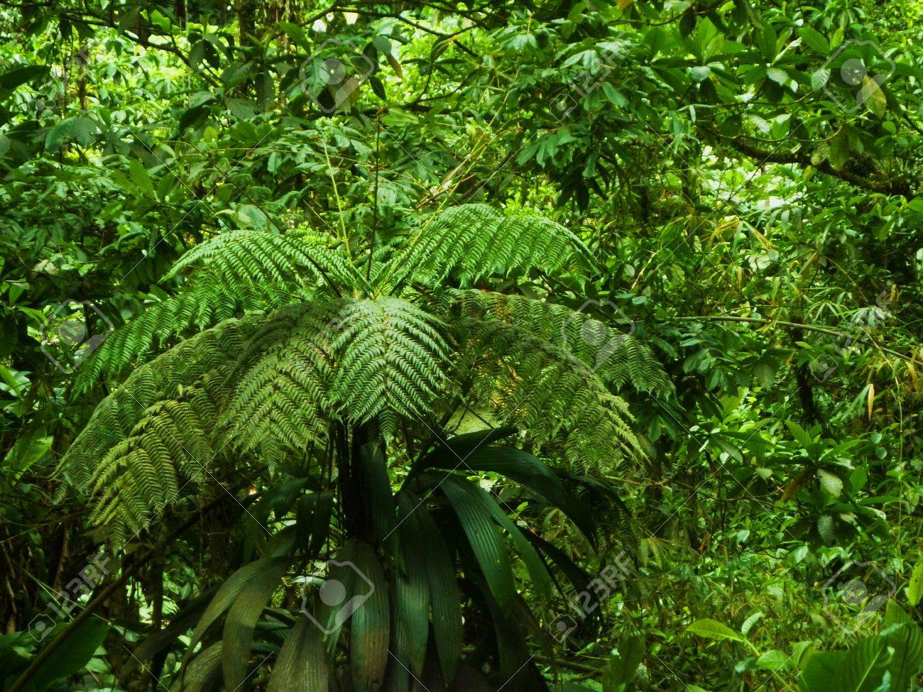 luxuriant vegetation Stock Photo - 50310029