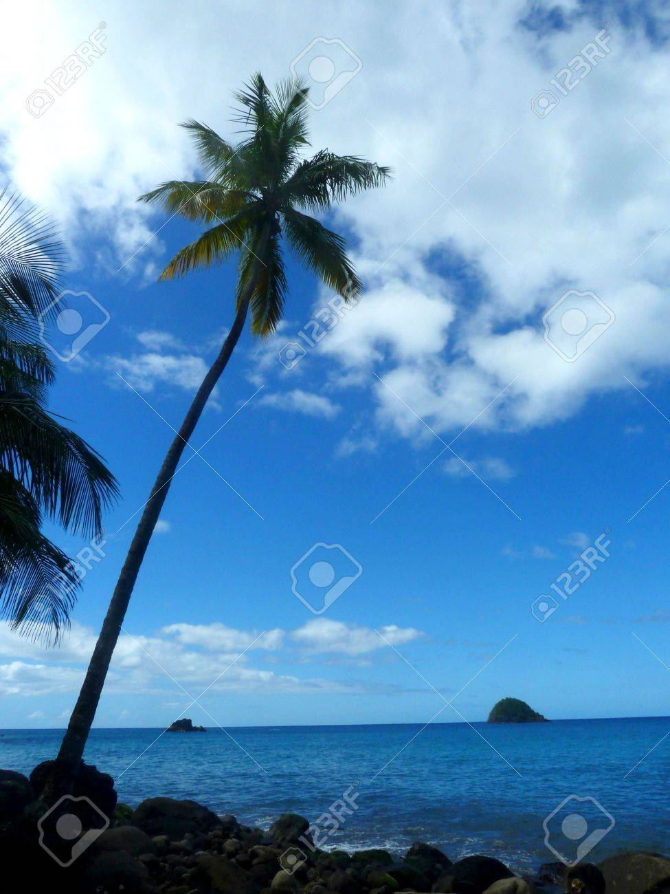 Palm tree by the sea Stock Photo - 57670818