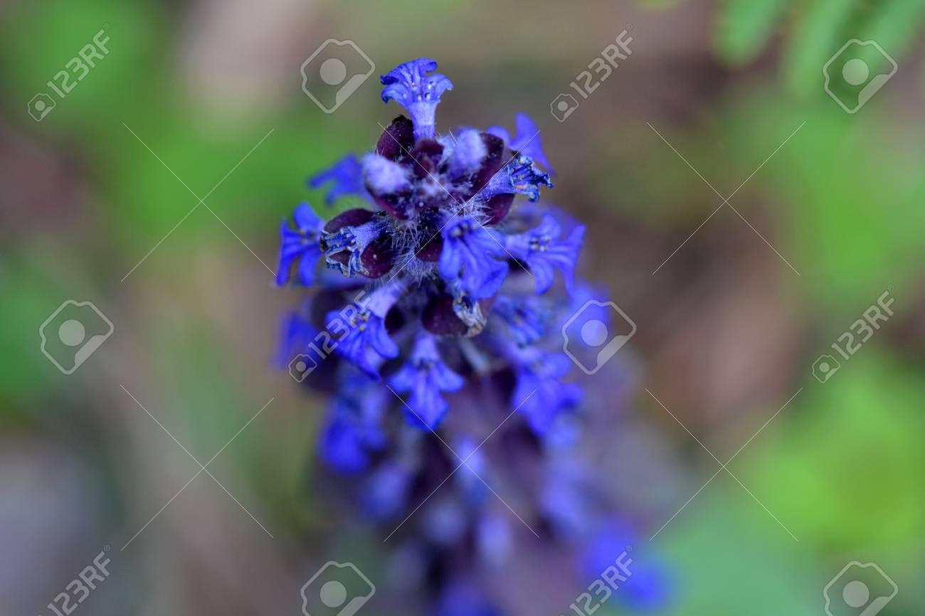 Blu spring flower close up Stock Photo - 58853581