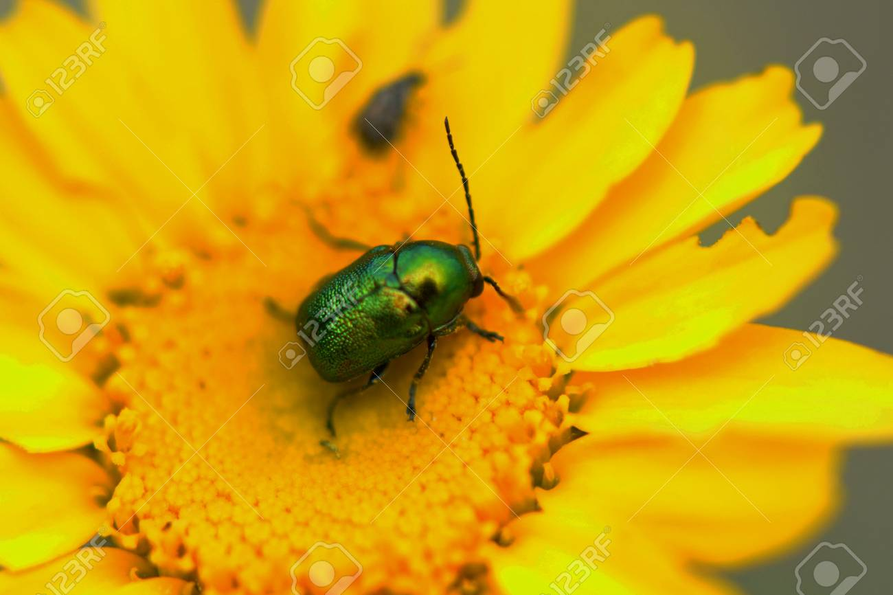 insect on yellow flower Stock Photo - 60200749