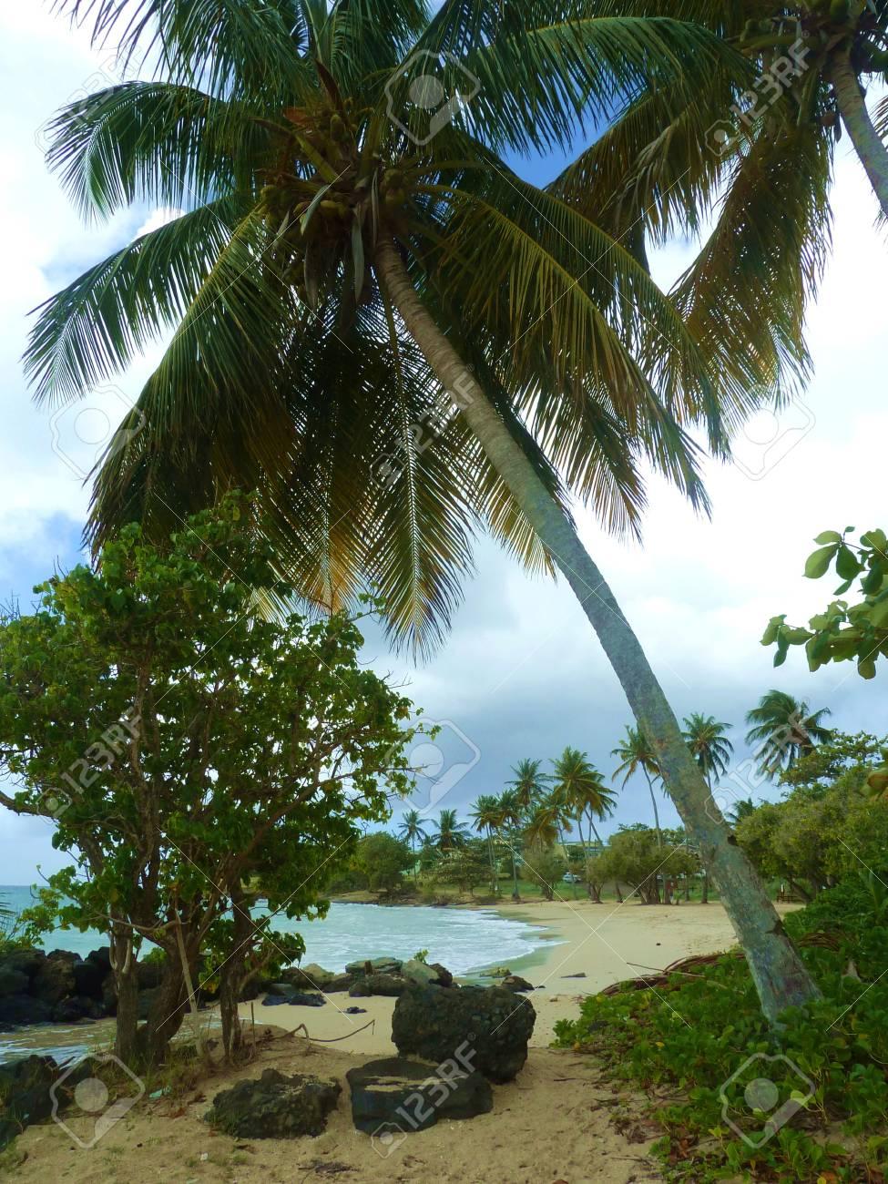 a beach on tropical island Stock Photo - 62461421