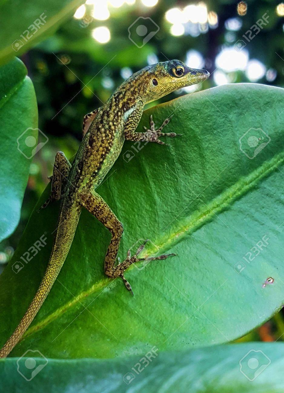 green lizard on leaf Stock Photo - 65556441