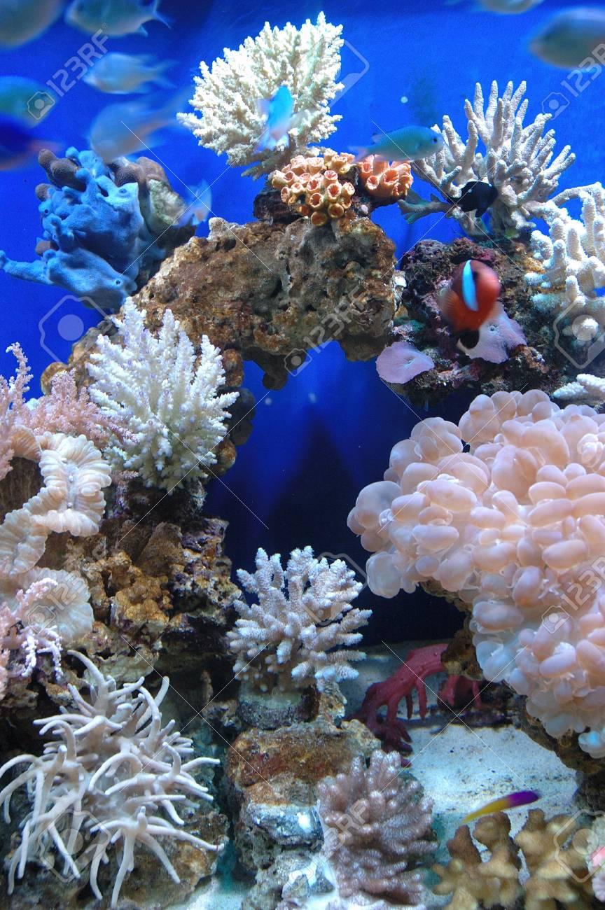 Aquarium Stock Photo - 4074602