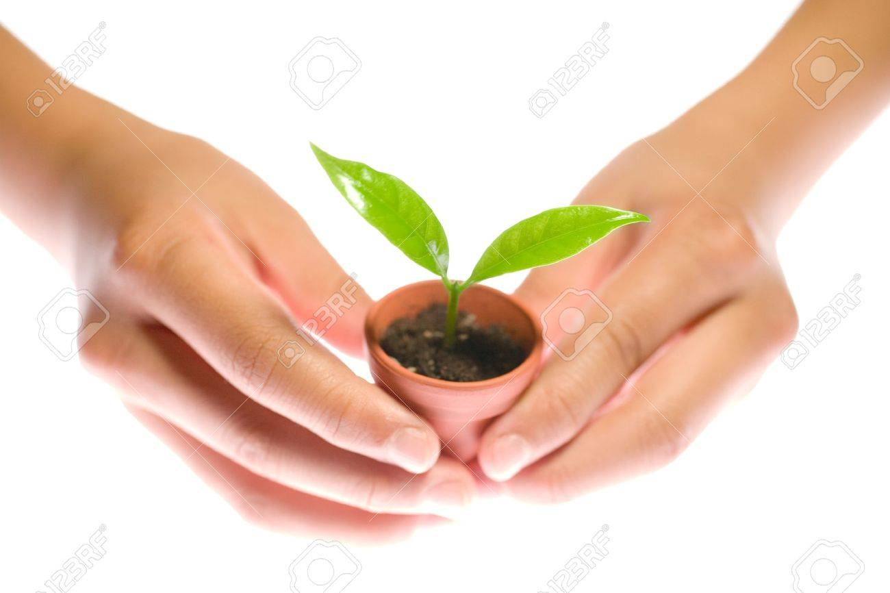Plant in hand on white background Stock Photo - 9479243