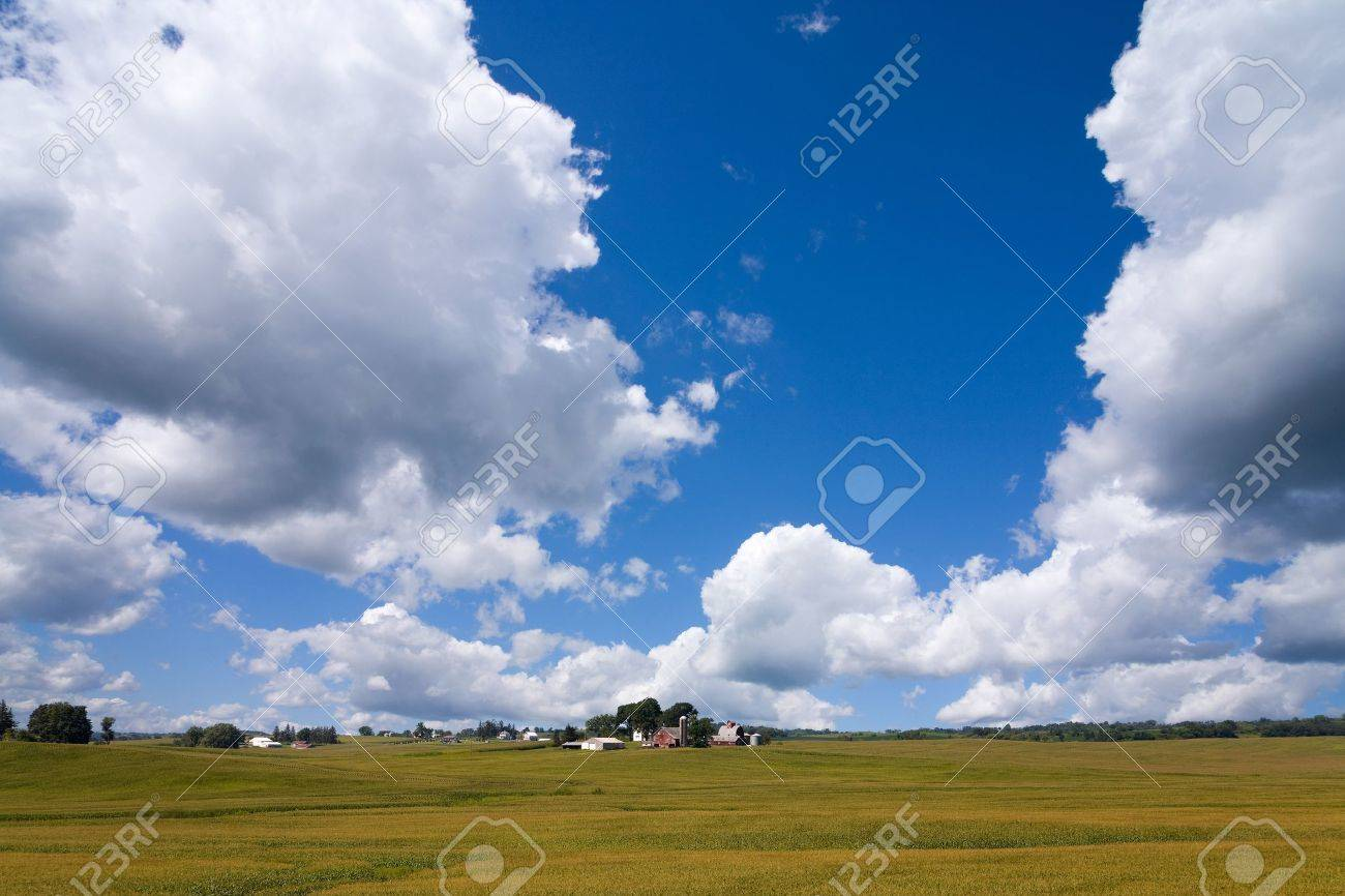 A rural American cornfield in Iowa Stock Photo - 9474602