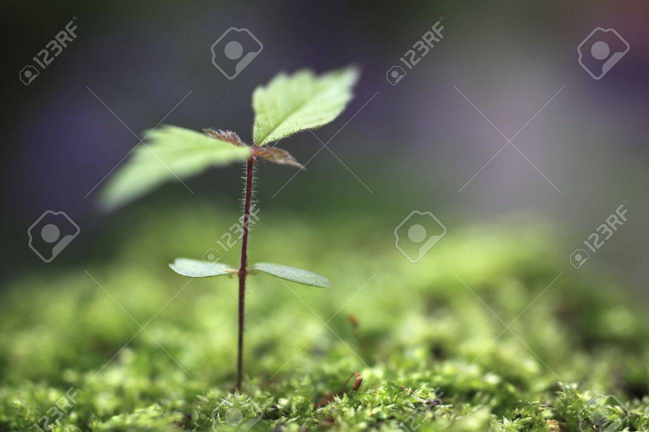 Sprout in the forest. Stock Photo - 16331107