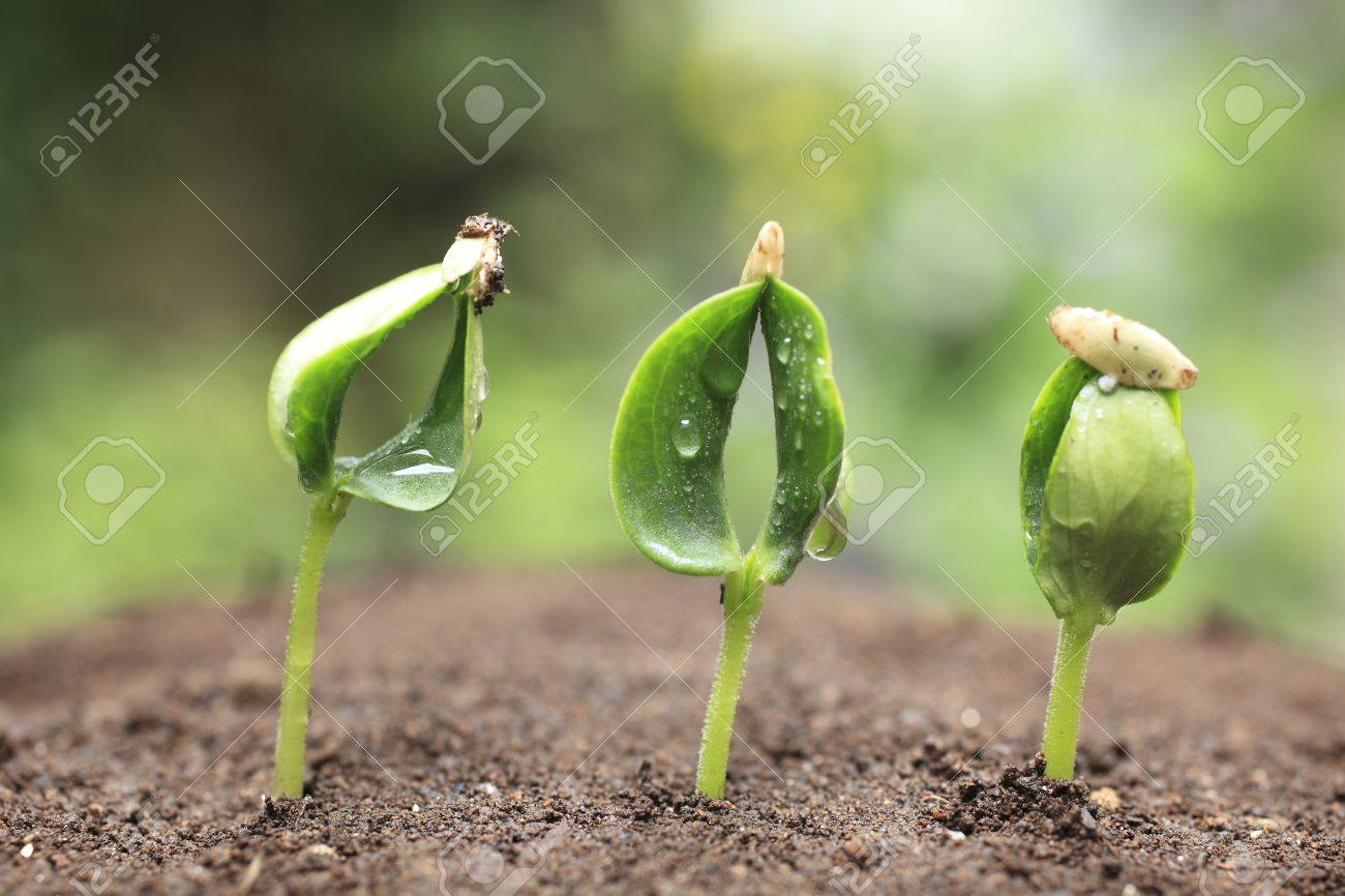 Sprout of the cucumber - 17553588