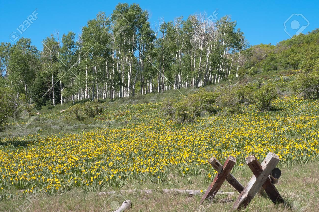 Pinyon Mesa near Glade Park in summer Stock Photo - 12593940