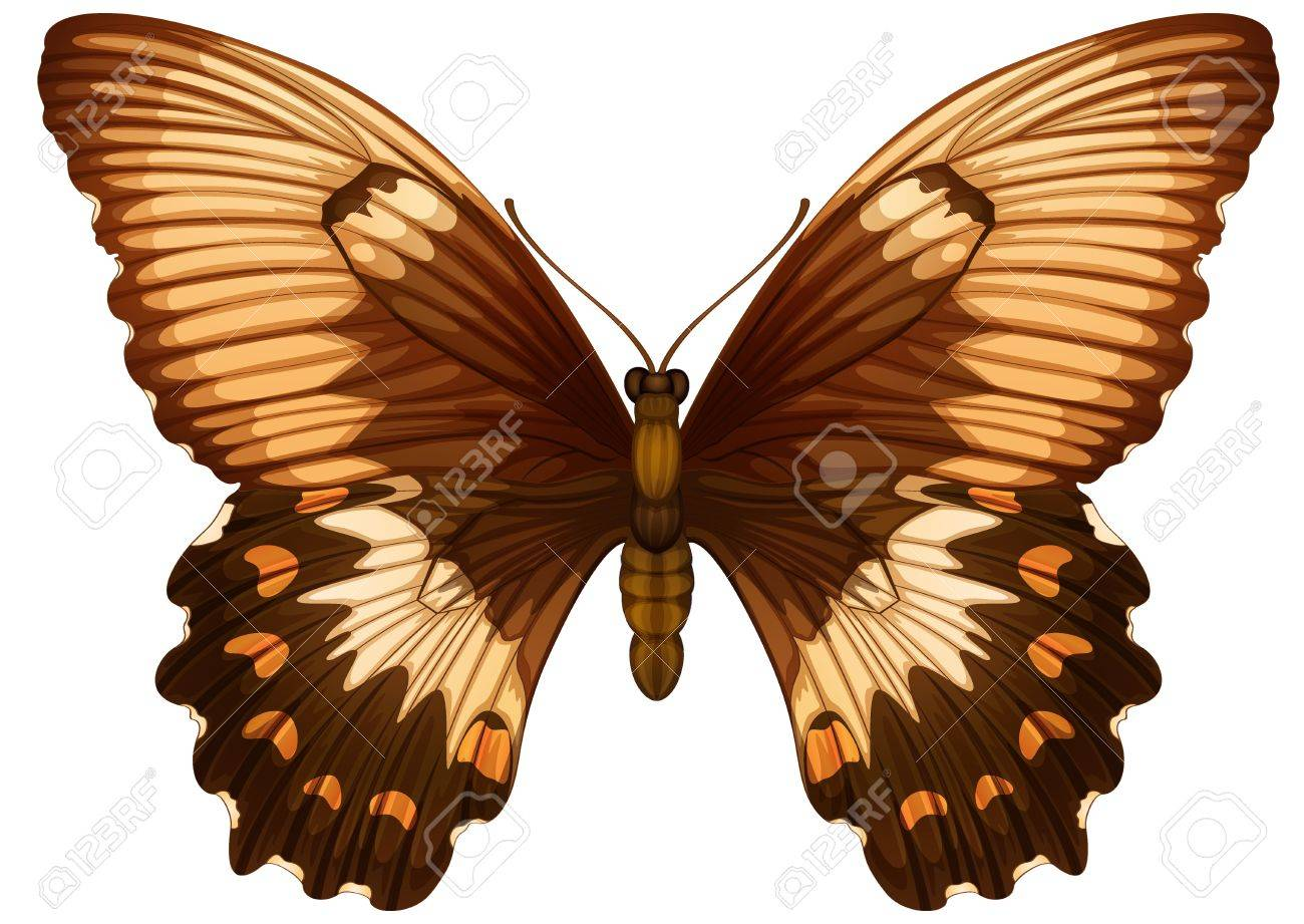 Illustration of a Papilio aegeuson a white background Stock Vector - 16053286