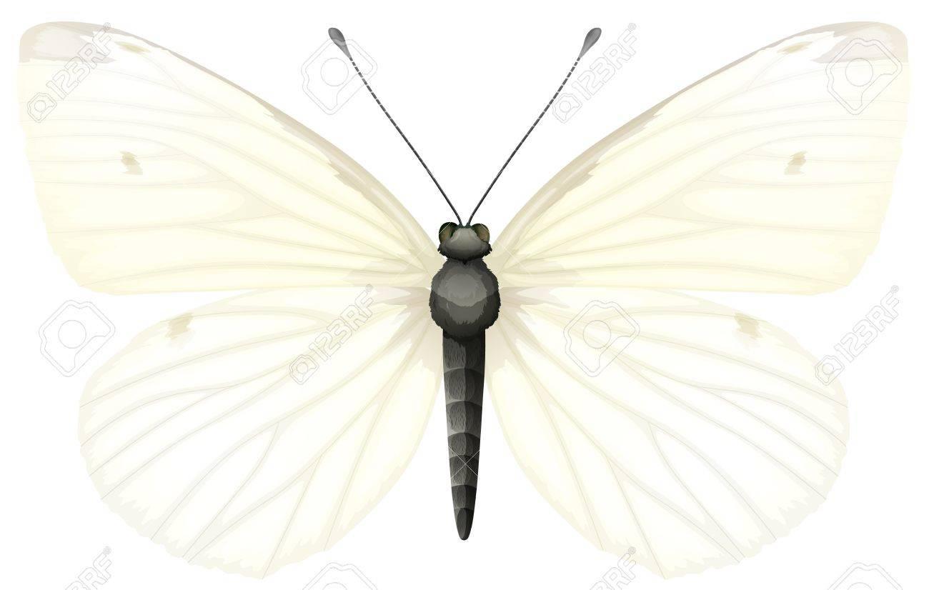小さな白い蝶 モンシロチョウのイラストのイラスト素材ベクタ