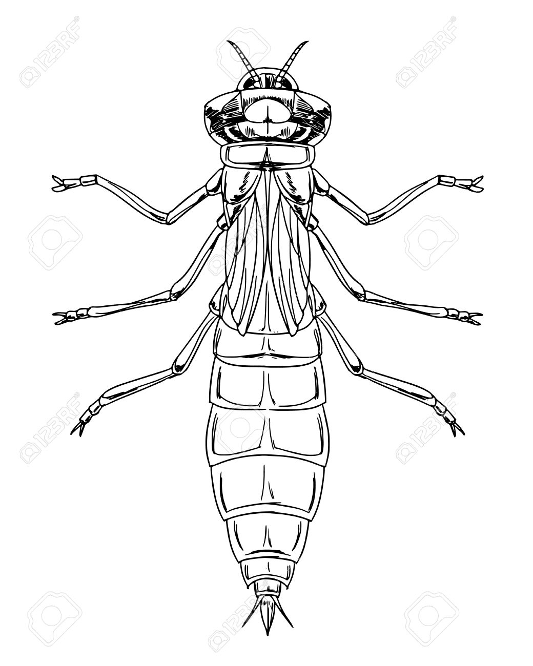 Sketch Of A Dragonfly Nymph Royalty Free Cliparts, Vectors, And ...