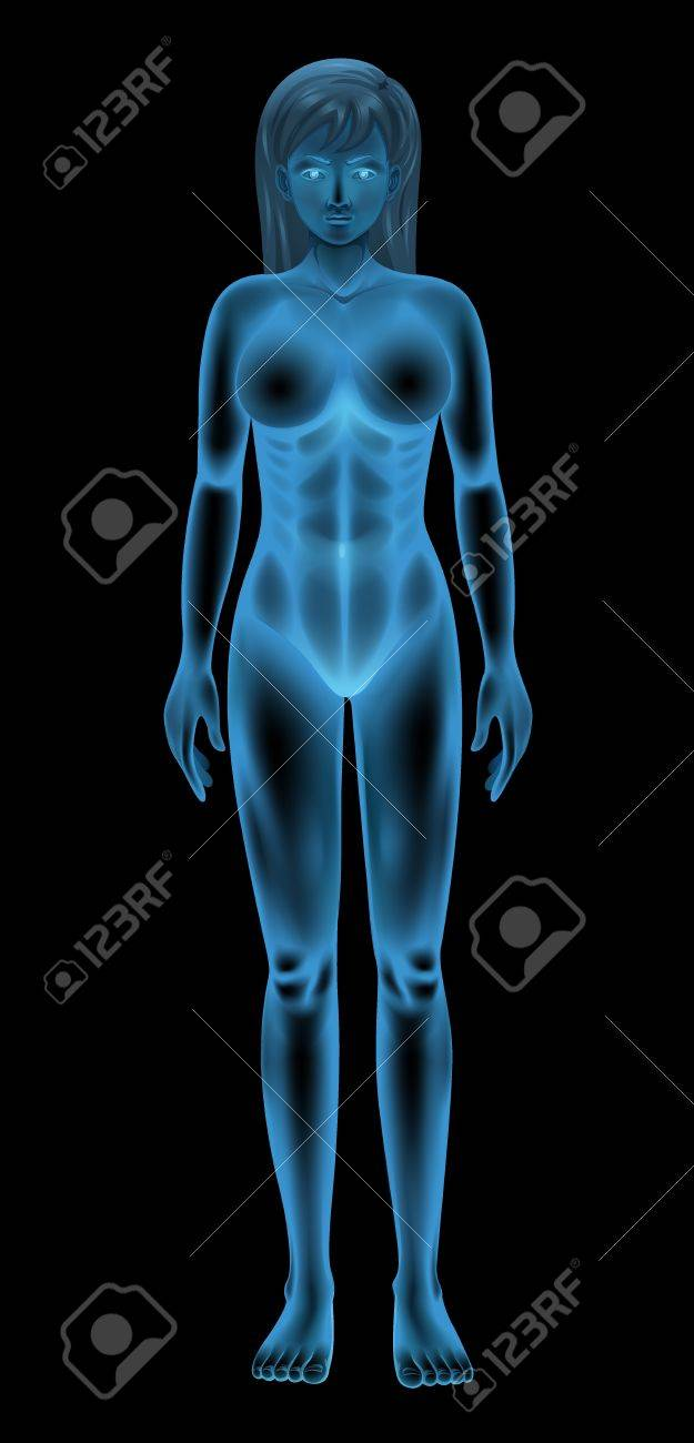 illustration of a generic female body Stock Vector - 16771578