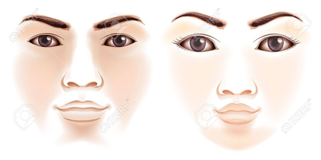 Illustration of the features of a human face Stock Vector - 20060057