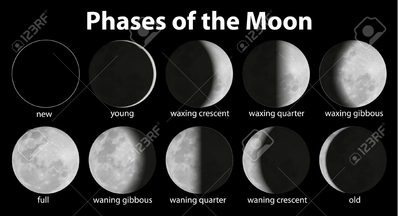 Illustration of the phases of the moon Stock Vector - 20679945
