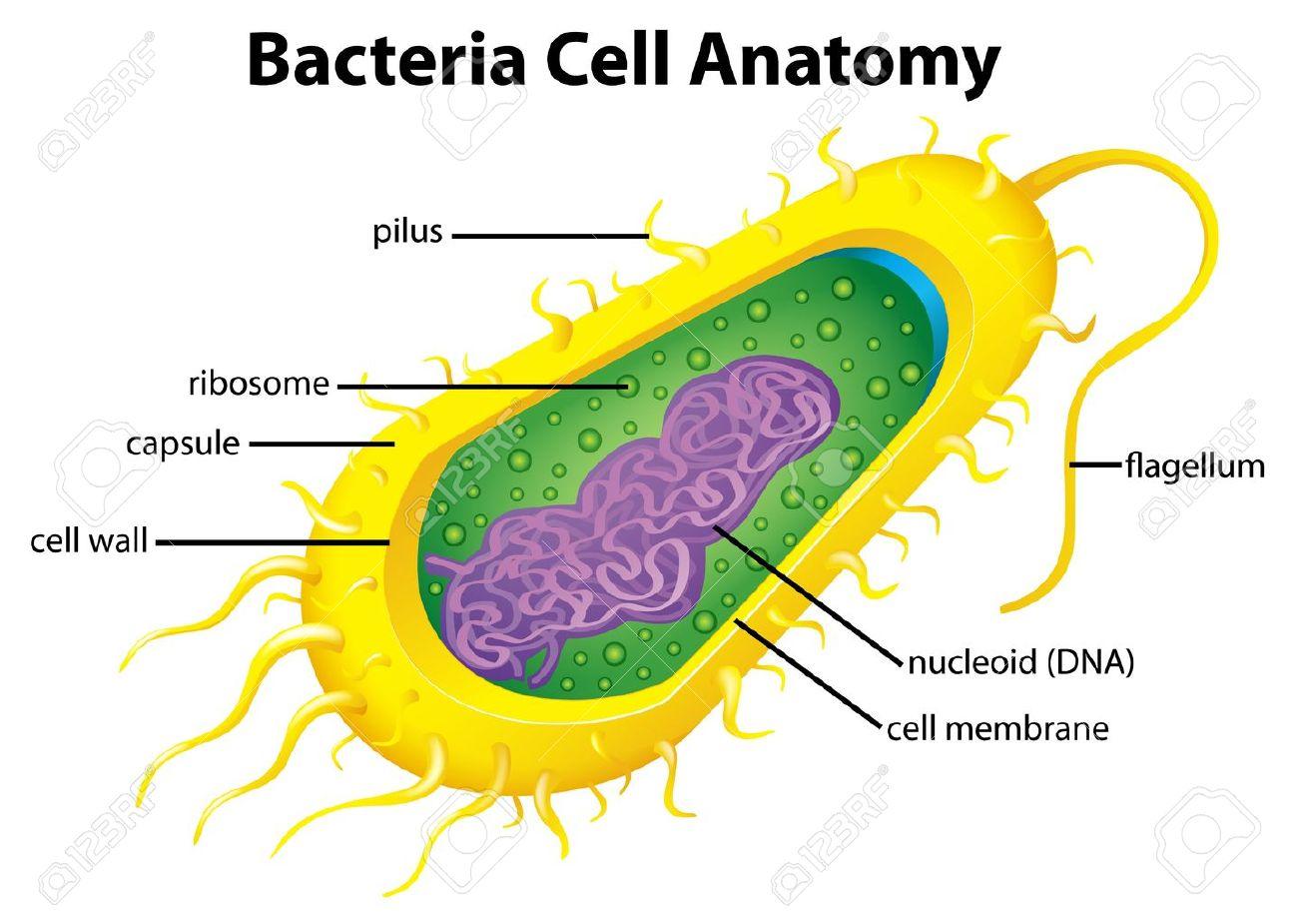 Как сделать бактерии своими руками