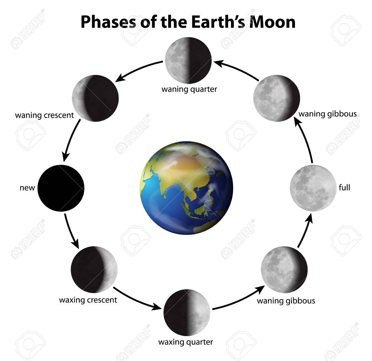 Illustration showing the phases of the Moon Stock Vector - 20774832