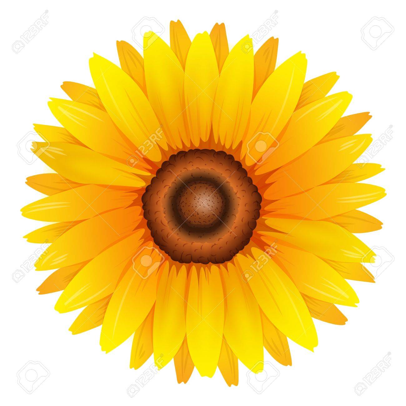 Illustration showing the sunflower Stock Vector - 21637768