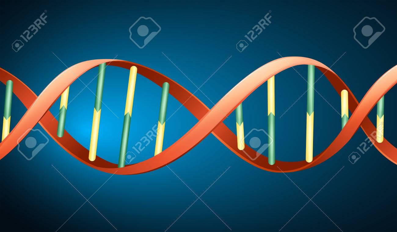 Illustration of the deoxyribonucleic acid Stock Vector - 22385925