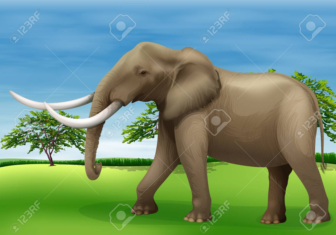 Illustration of the elephant Stock Vector - 22605848
