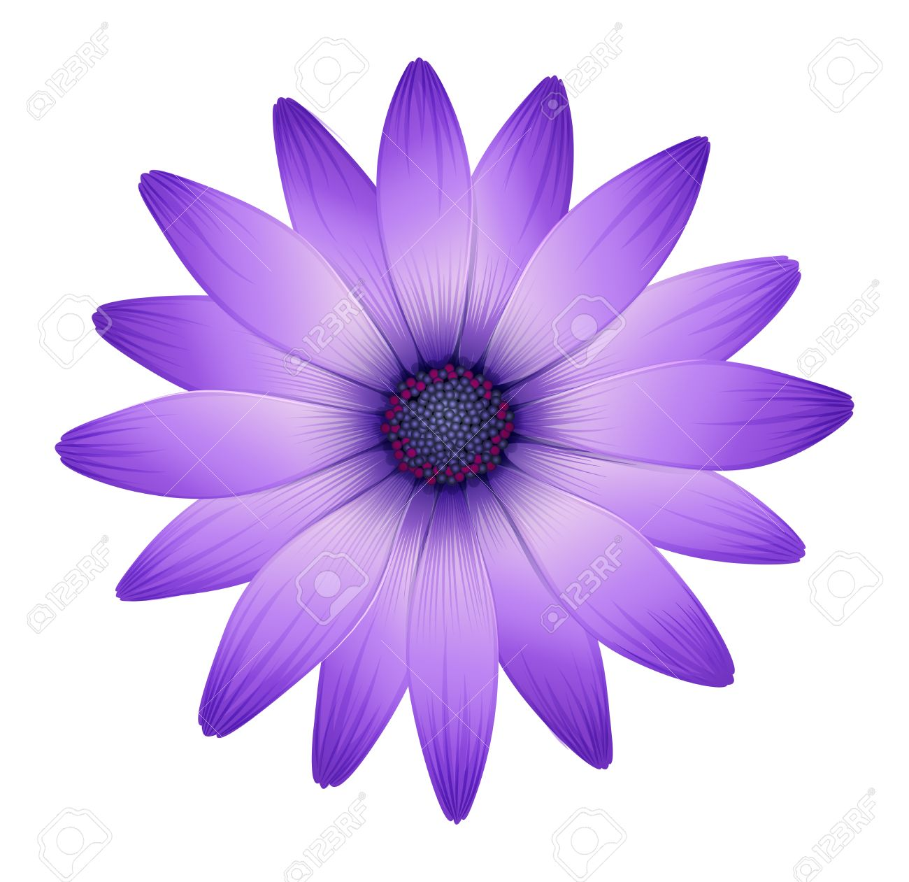 Purple flowers white background amazing wallpapers illustration of a fresh purple flower on a white background mightylinksfo
