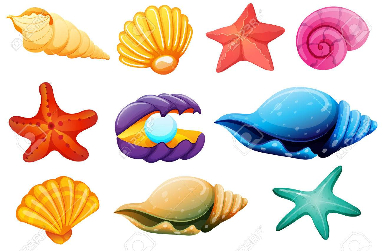 illustration of a shell collection on a white background royalty rh 123rf com sea shell clip art images seashell clip art free borders