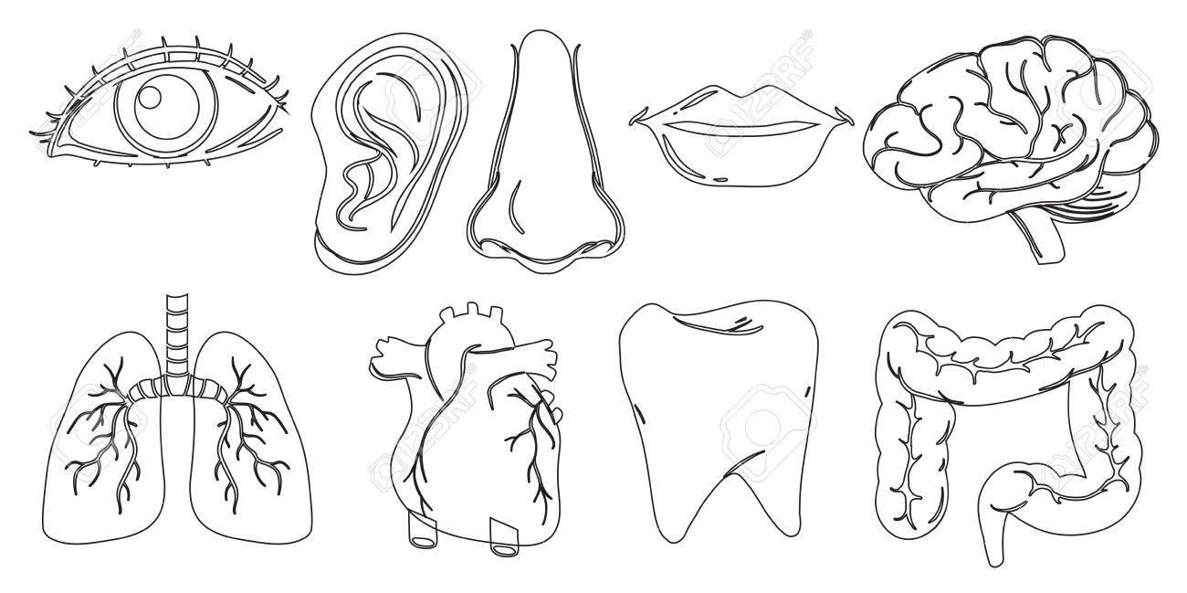 Ilustración Del Diseño Del Doodle De Las Diferentes Partes Internas ...