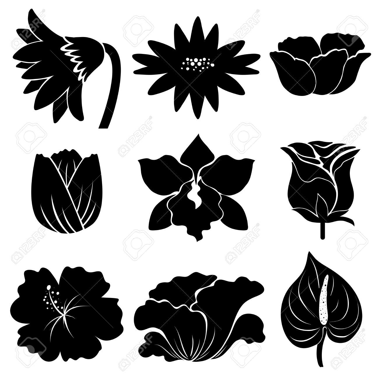 Sample Of Different Types Of Flowers In Black Color Royalty Free ...