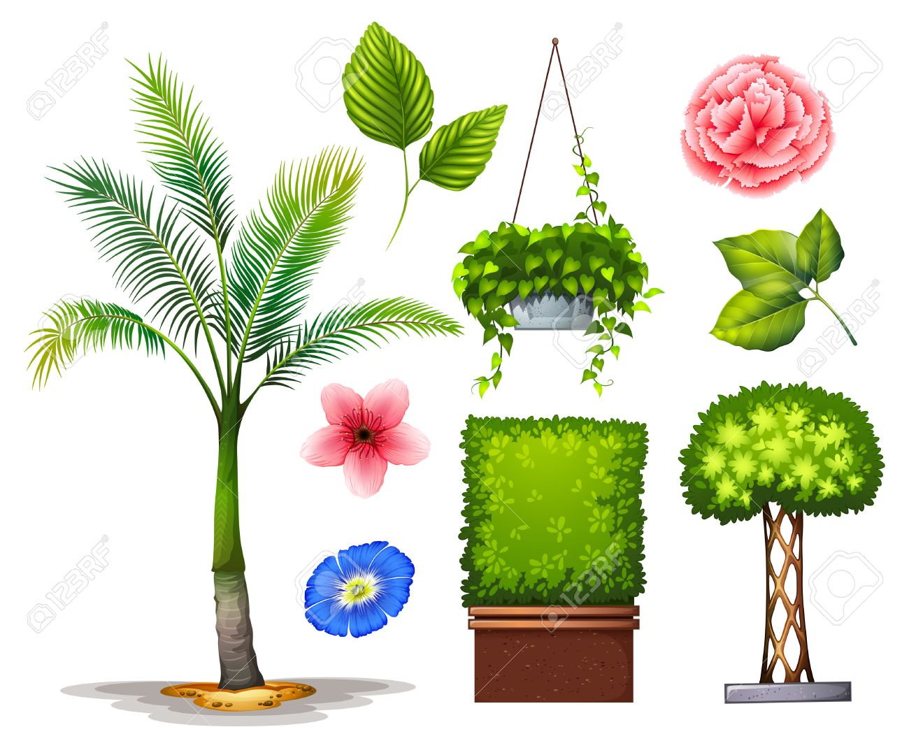 Different Kind Of Plants In The Garden Stock Vector 42520080