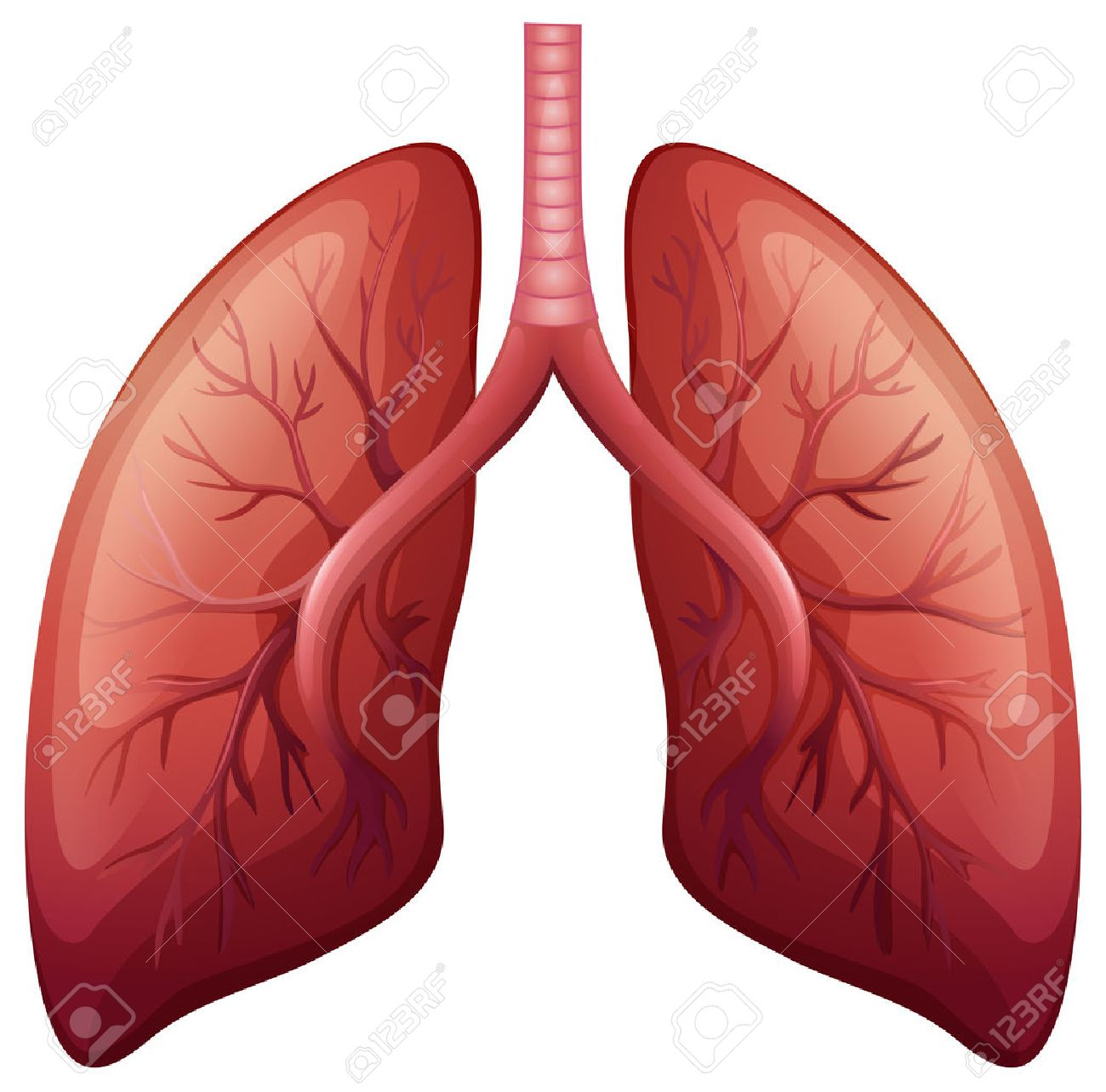 Lungs images stock pictures royalty free lungs photos and stock lung cancer diagram in detail illustration ccuart Images