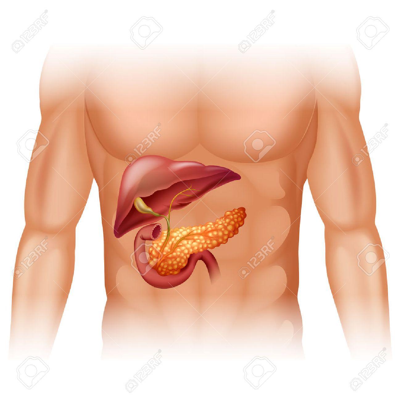 Pancreas stock photos royalty free pancreas images pancreas cancer diagram in detail illustration illustration ccuart Choice Image