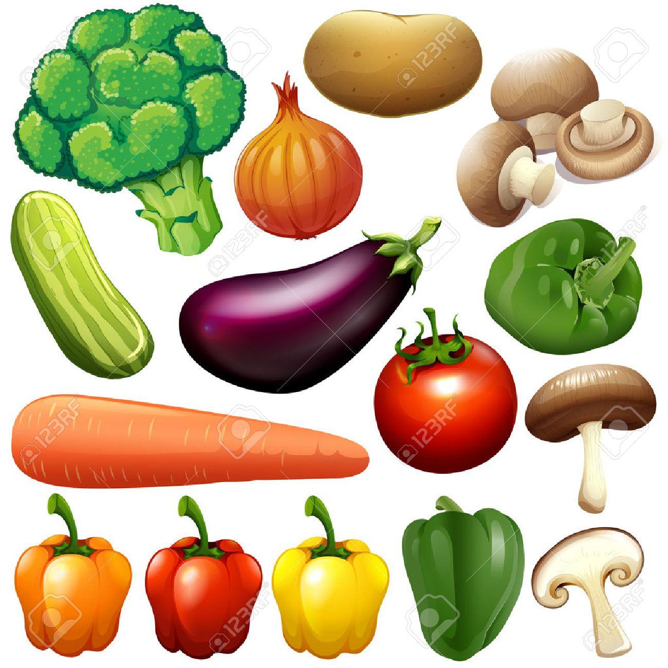 Different kind of fresh vegetables illustration - 44789429
