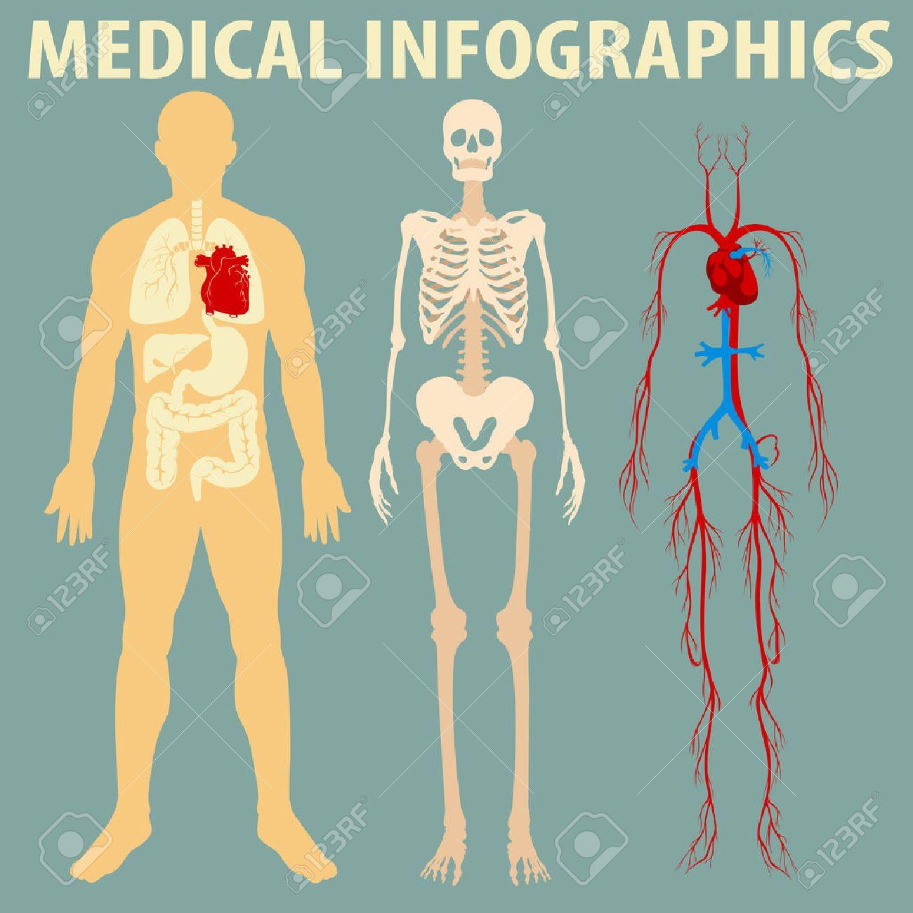 Infografía De Medicina De La Ilustración Cuerpo Humano Ilustraciones ...