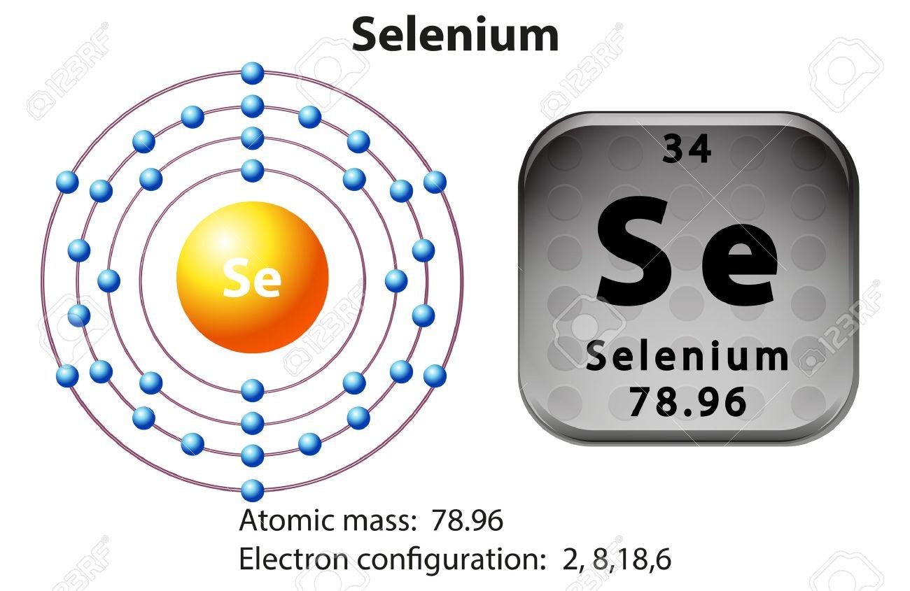 Symbol and electron diagram for selenium illustration royalty free symbol and electron diagram for selenium illustration stock vector 45062920 buycottarizona