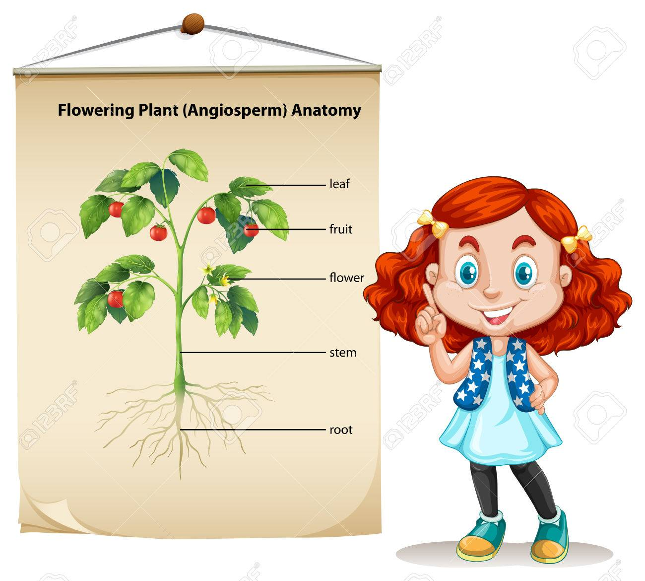 Little Girl And Plant Anatomy Illustration Royalty Free Cliparts ...