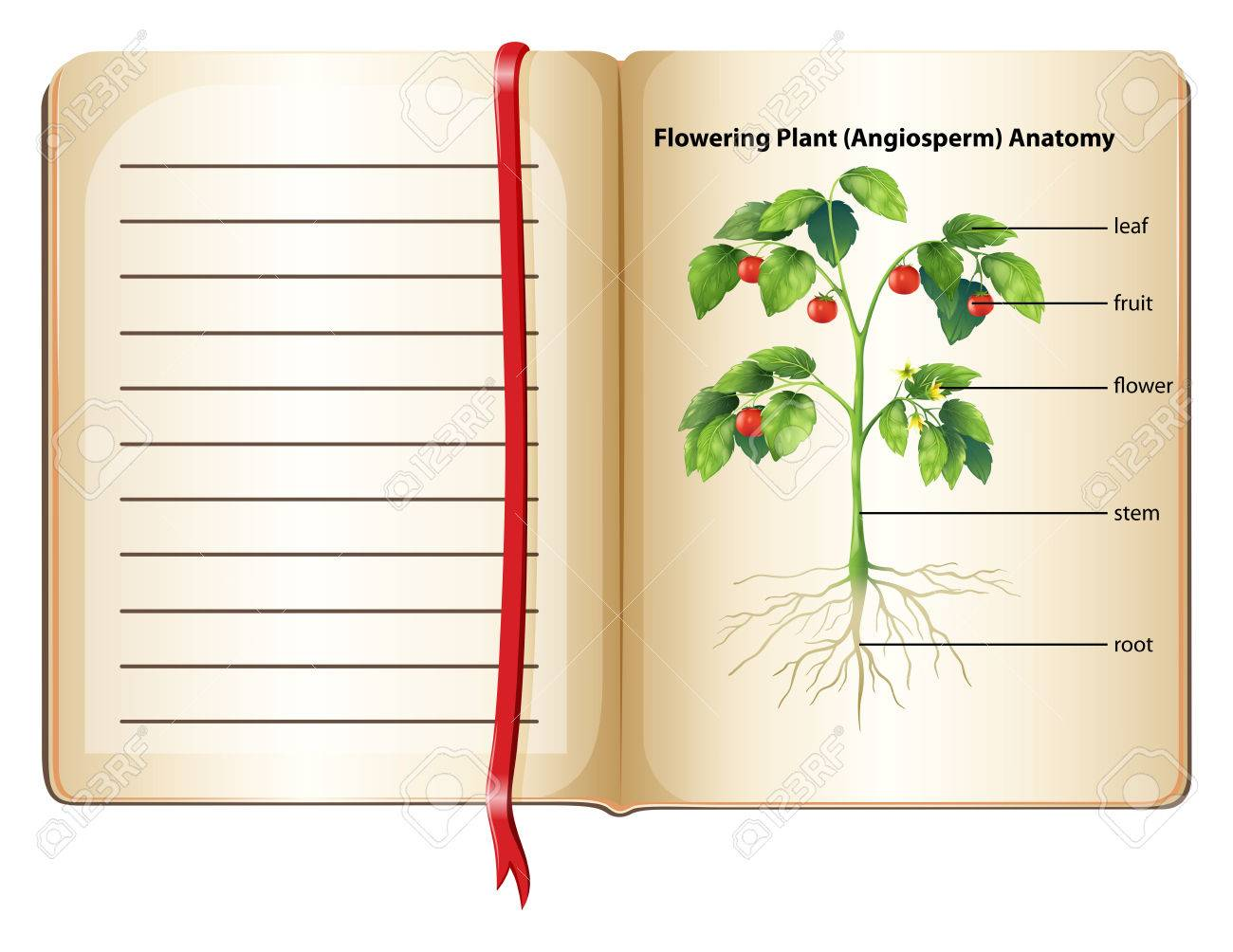 Flowering Plant Anatomy On Page Illustration Royalty Free Cliparts ...