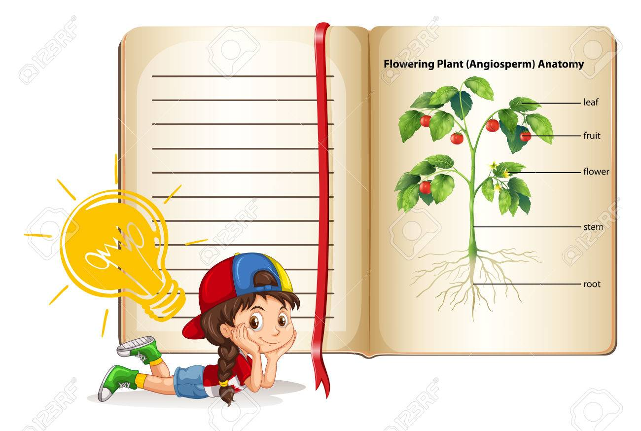Girl And Flowering Plant Anatomy Illustration Royalty Free Cliparts ...