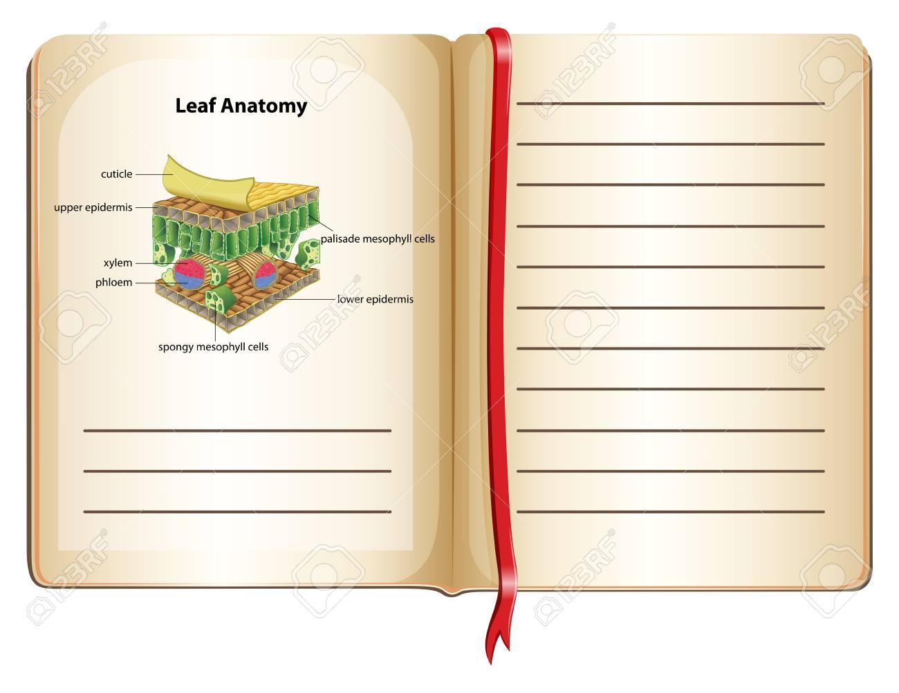 Cuaderno Y La Anatomía De La Hoja En La Página De La Ilustración ...