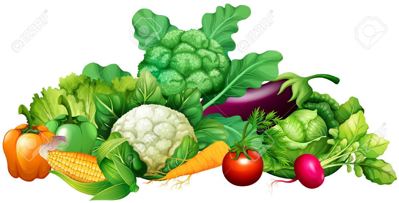 Different kind of vegetables illustration - 50176546