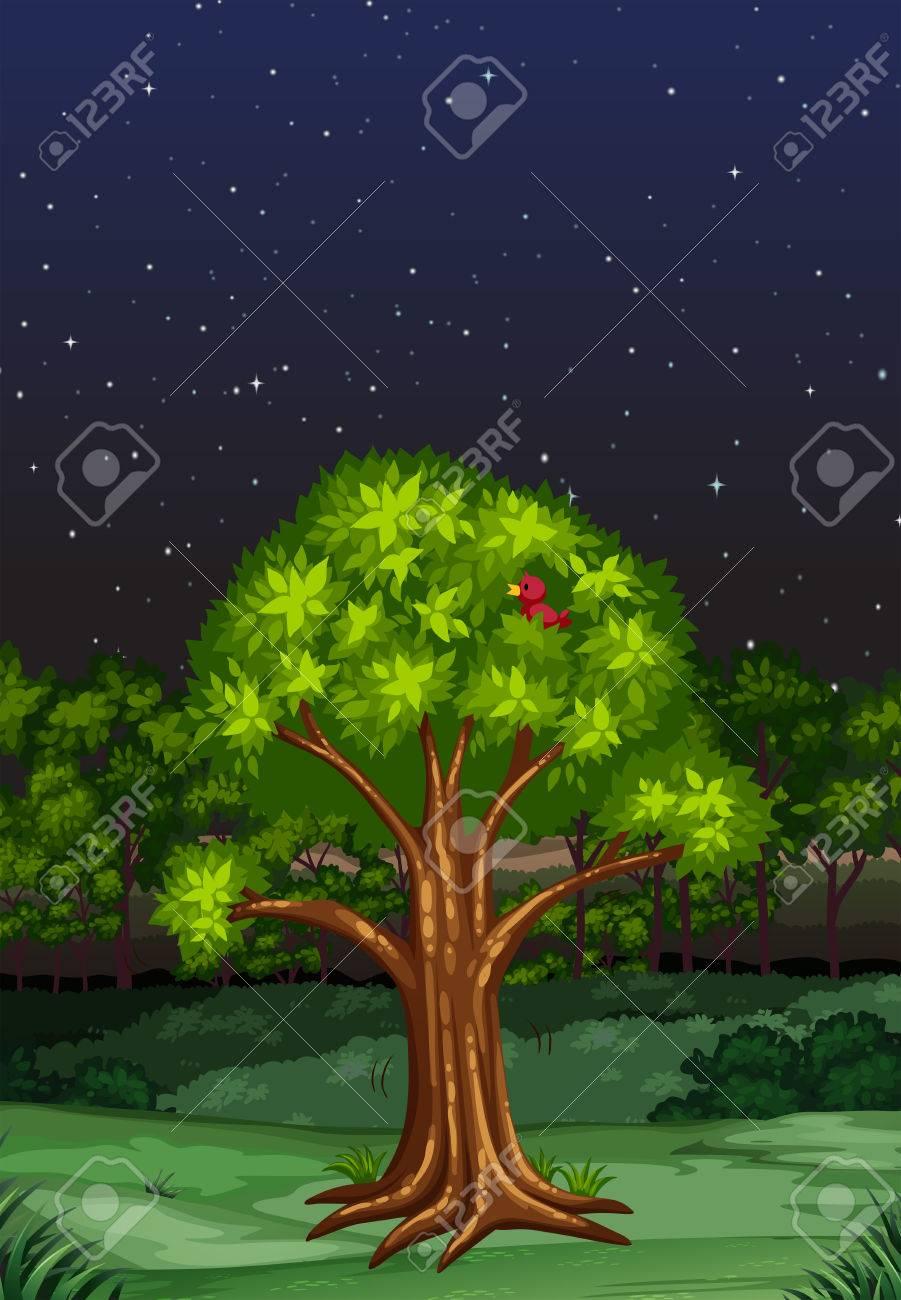 Nature scene at night time illustration - 52036772