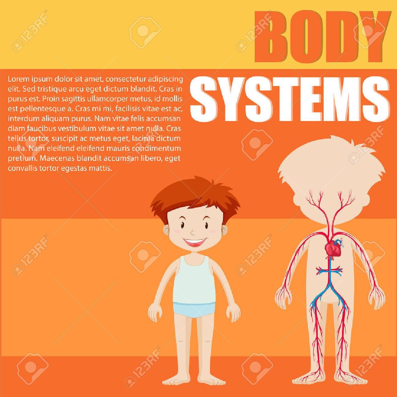 Diagrama De Chico Y Sistema De órganos De La Ilustración ...