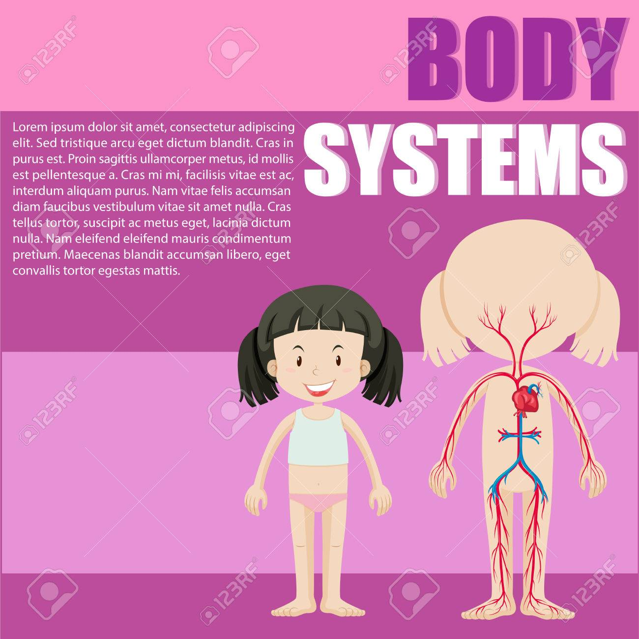 Body system of a girl illustration - 52039423