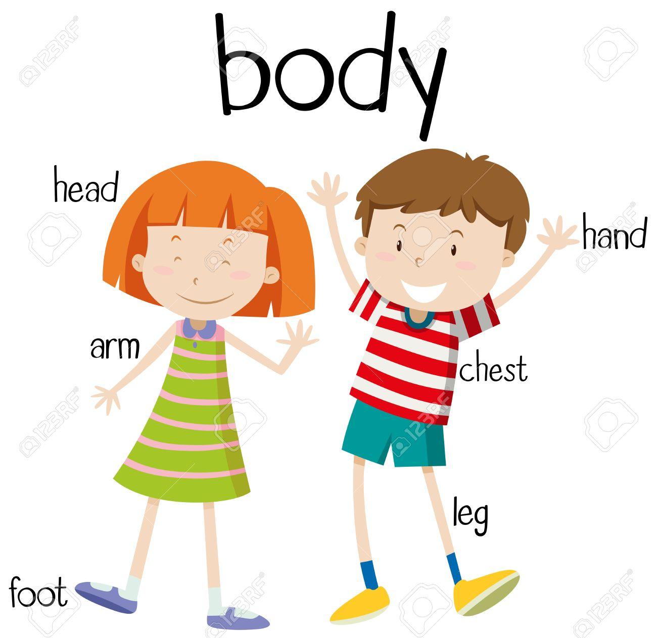 Partes Del Cuerpo Humano Diagrama De La Ilustración Ilustraciones ...