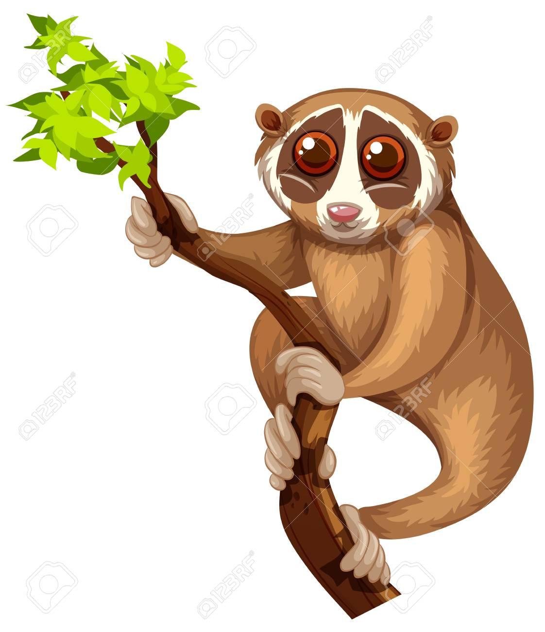 Wild loris on the branch illustration - 53746052