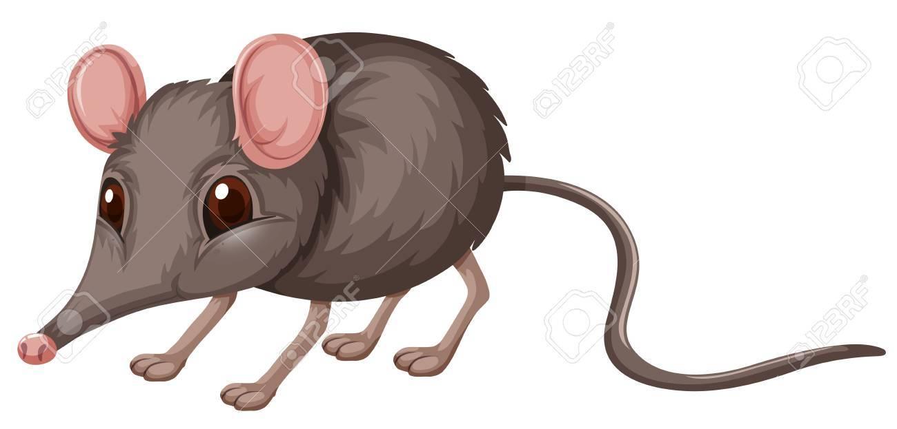 Pequeña Rata Con La Ilustración De Piel Gris Ilustraciones ...